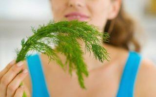 Семена укропа в урологии: полезные свойства и противопоказания