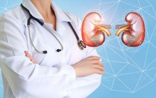 Пересадка почки: стоимость, ход операции, отзывы и прогноз