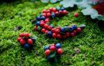 Брусника при цистите: как принимать листья и ягоды растения при заболевании