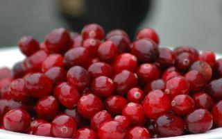 Клюква для почек: полезные и лечебные свойства, противопоказания