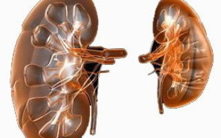Вторичный пиелонефрит: виды, причины, симптомы и лечение
