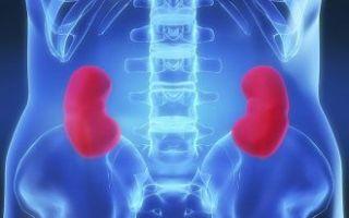 Чашечно-лоханочная система: патологии и врожденные пороки
