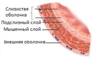 Мочевой пузырь: расположение, строение у мужчин и женщин