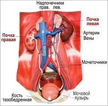 Гиперурикемия: что это такое, причины, симптомы, последствия, медикаментозное лечение, народные методы