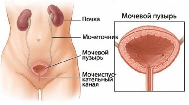 Как лечить взвесь в мочевом пузыре у ребенка на УЗИ: что это, причины, симптомы