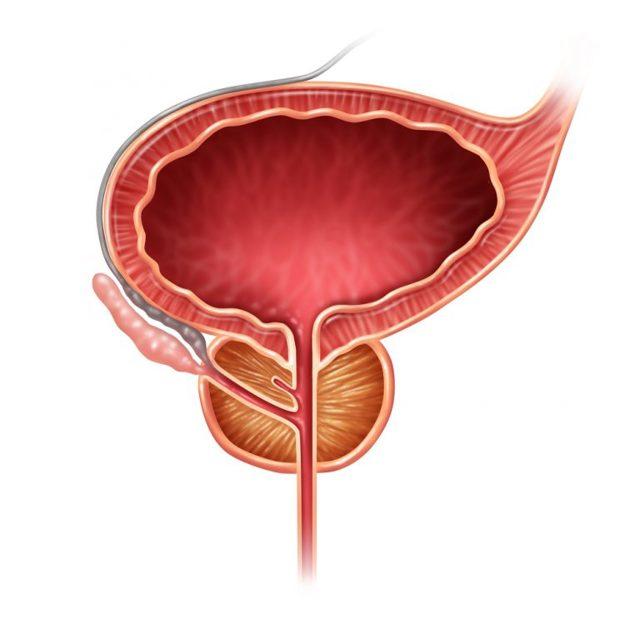 Уретроскопия у мужчин и женщин: показания, противопоказания, как проходит, осложнения