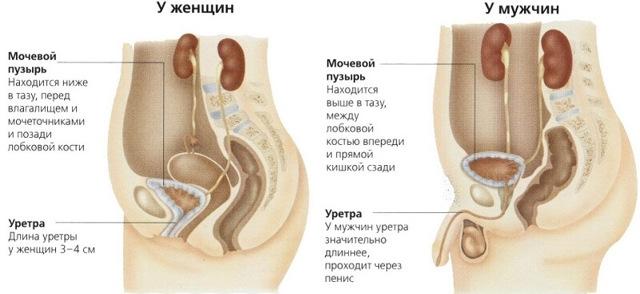 Хронический уретрит у женщин и мужчин: симптомы и лечение