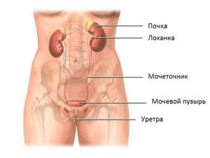 Суточный диурез у женщин, мужчин и детей: норма, отклонения, повышенный, лечение
