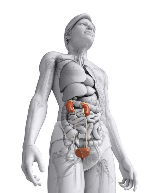 Блуждающая почка: причины, симптомы, лечение и прогноз