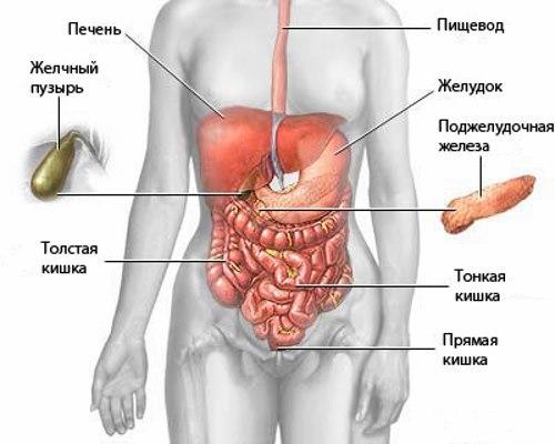 Как делается УЗИ брюшной полости - подготовка, что показывает ультразвуковое исследование органов