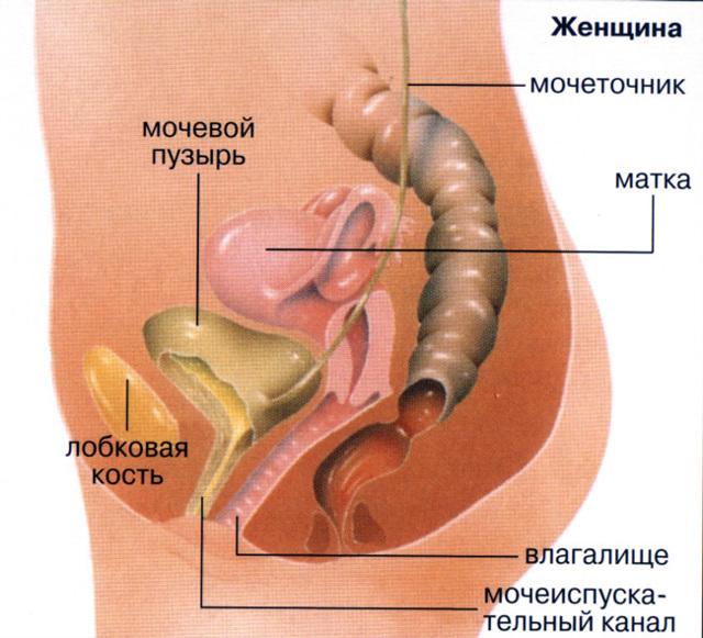 Резь и жжение при мочеиспускании у женщин - причины, симптомы, лечение
