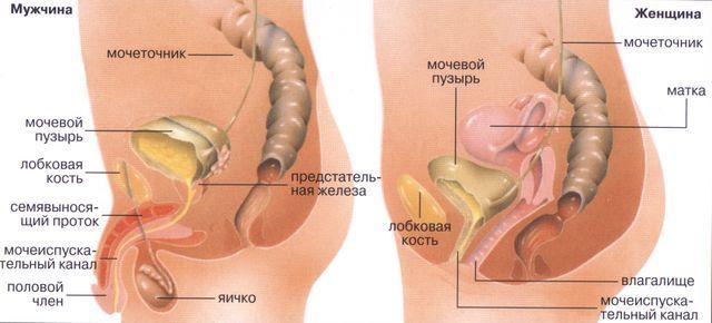 Причины крови и боли при мочеиспускании у женщин