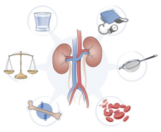 Гломерулонефрит: патогенез, симптомы, диагностика и лечение