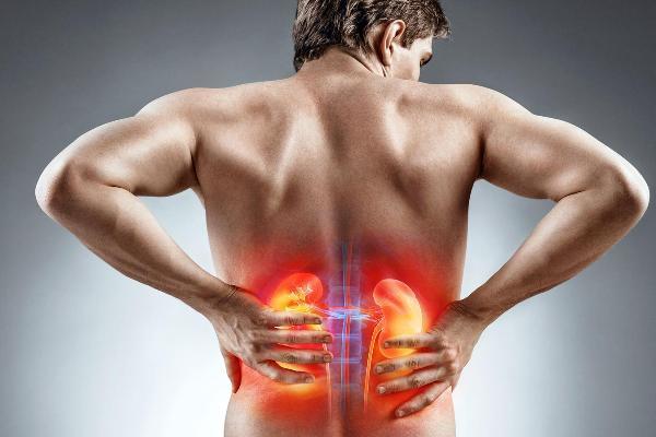 Как определить болят почки или спина: симптомы и лечение