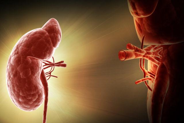 Как стать донором почки: стоимость органа и ход процедуры