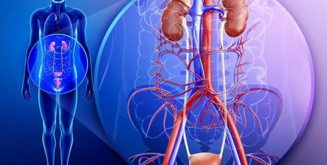 Лейкоплакия мочевого пузыря: причины, симптомы, лечение