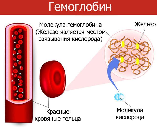 Что значит положительный гемоглобин в моче и причины его появления