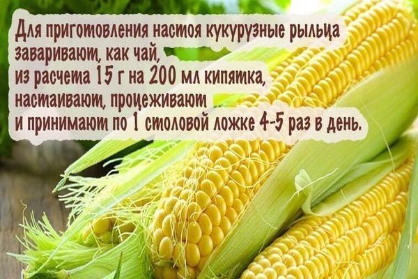 Кукурузные рыльца: лечебные свойства и применении в урологии