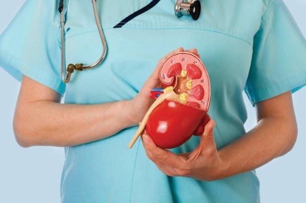 Гломерулосклероз почек: виды, симптомы, диагностика и лечение