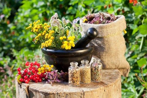 Симптомы и лечение песка в мочевом пузыре у женщин: препараты, настои трав, диета