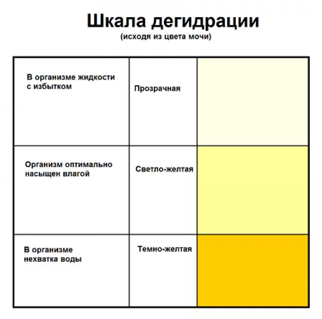 Правильная расшифровка общего анализа мочи (ОАМ) у взрослых и детей - таблица, показатели, норма