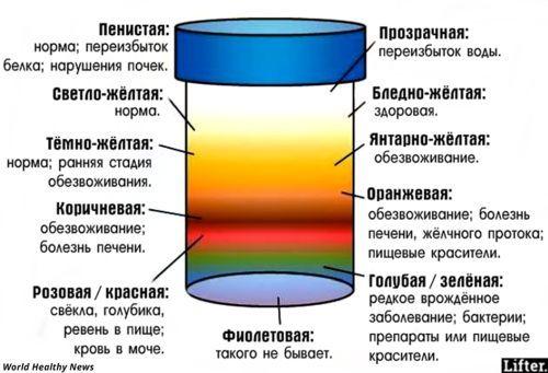 Цвет мочи здорового человека: норма, что влияет, диагностика