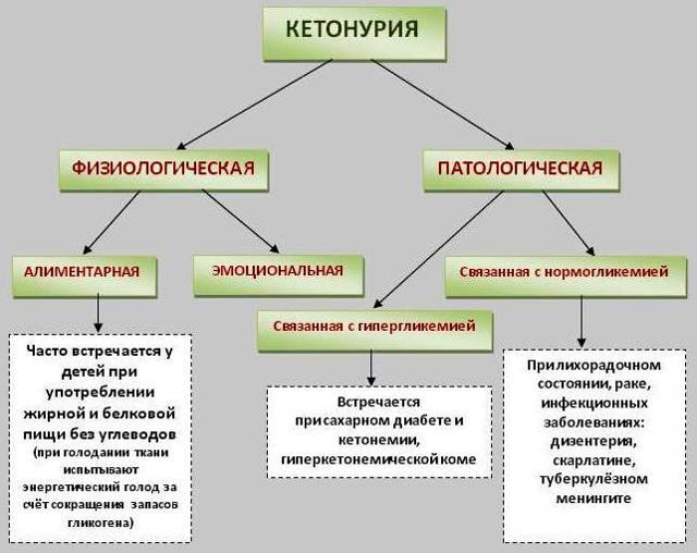 Повышенные кетоновые тела в моче при беременности: норма, причины, диагностика, лечение (диета)